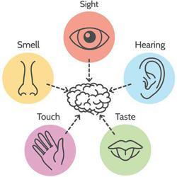 Five Senses Clubhouse